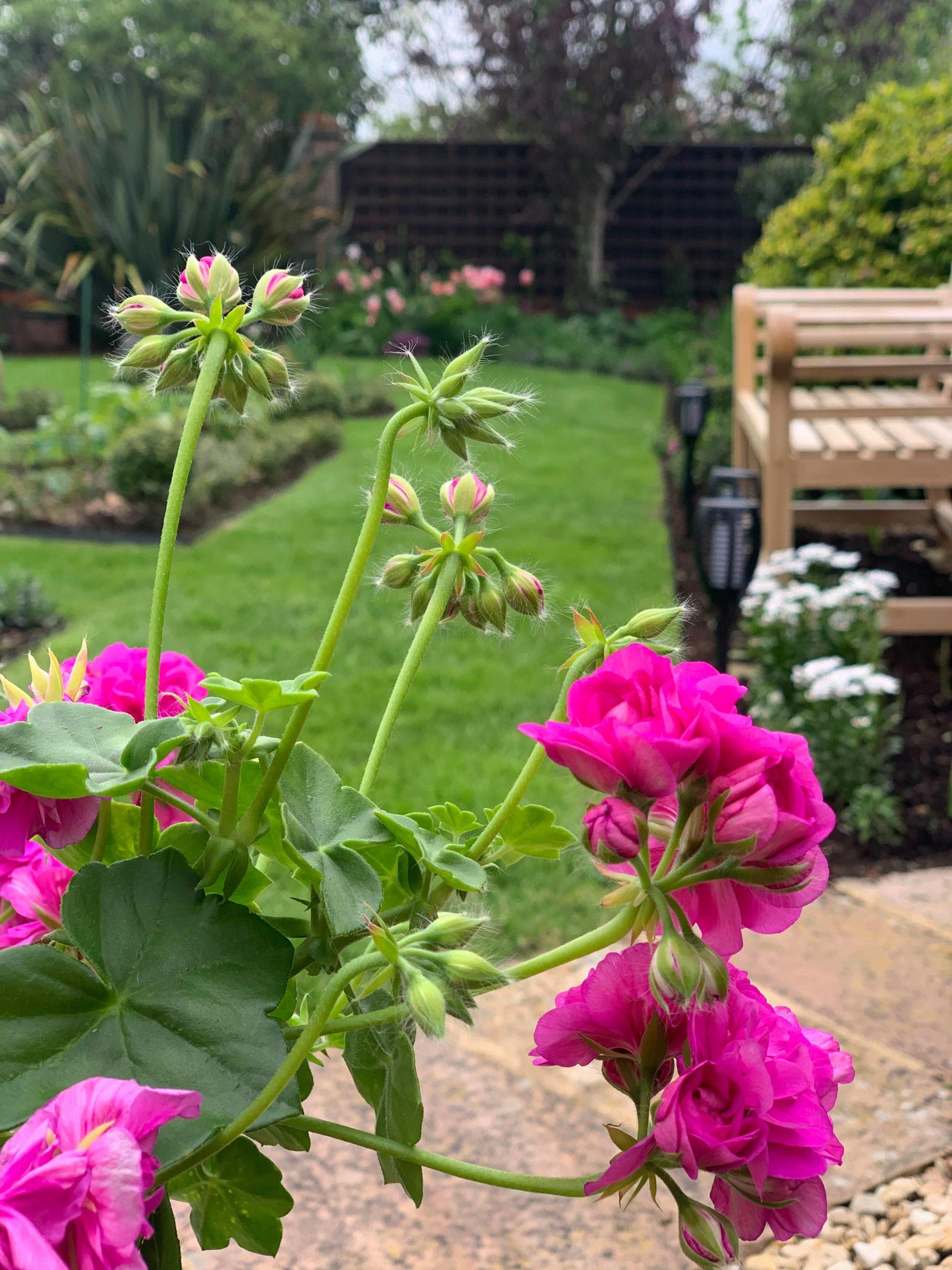gardening tips, energetics